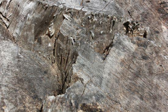 Baum Textur 3